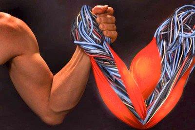 Какие мышцы работают в армрестлинге